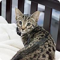 Adopt A Pet :: Mingo - Fountain Hills, AZ
