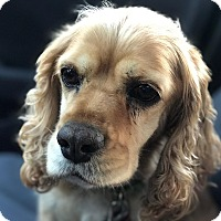 Adopt A Pet :: Natalie - Santa Barbara, CA