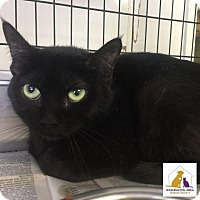 Adopt A Pet :: Trixie - Eighty Four, PA