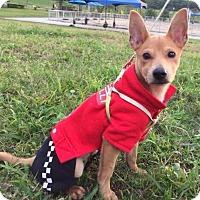 Adopt A Pet :: Salma Yenchi - Seattle, WA