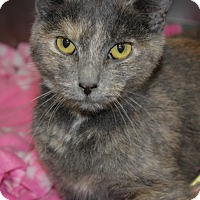 Adopt A Pet :: Andrea Walsh - Martinsville, IN