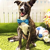 Adopt A Pet :: Lorenzo - Castro Valley, CA