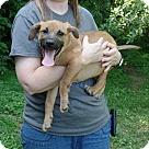 Adopt A Pet :: Perry