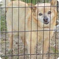 Adopt A Pet :: KIngston - Fowler, CA
