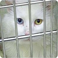 Adopt A Pet :: Sleven - Secaucus, NJ