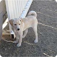 Adopt A Pet :: Duchess - Phoenix, AZ