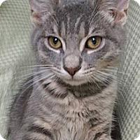 Adopt A Pet :: Beau - Modesto, CA