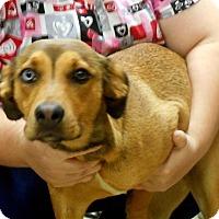 Adopt A Pet :: Ruca - baltimore, MD