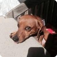 Adopt A Pet :: CALVIN - Atascadero, CA