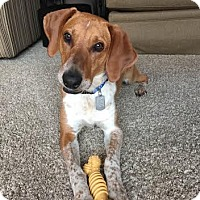 Adopt A Pet :: Jerry - Toledo, OH