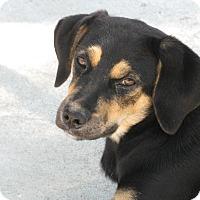 Adopt A Pet :: Eevee - Groton, MA