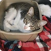 Adopt A Pet :: Scuttle - Richboro, PA