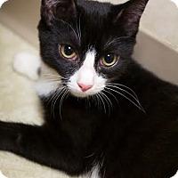 Adopt A Pet :: Bubbles - Montclair, NJ