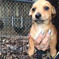 Adopt A Pet :: Arthur - Lodi, CA