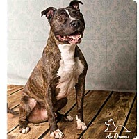 Adopt A Pet :: ROCKO - Salt Lake City, UT