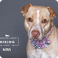 Adopt A Pet :: Kira - Houston, TX