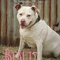 Adopt A Pet :: Beauty - Cheney, KS