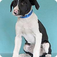 Adopt A Pet :: Leland - Waldorf, MD
