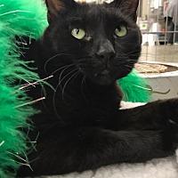 Adopt A Pet :: Velvet - Devon, PA