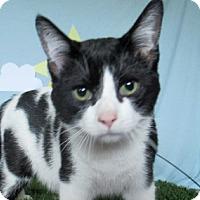 Adopt A Pet :: Claude - Lloydminster, AB