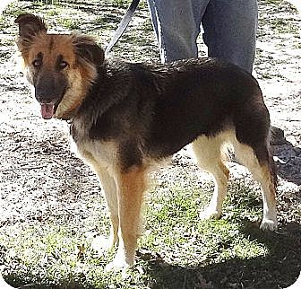 German Shepherd Dog Dog for adoption in SAN ANTONIO, Texas - CLEO / CESAR