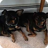 Adopt A Pet :: Johnny - Syracuse, NY
