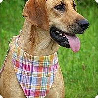 Adopt A Pet :: Gilda - Albany, NY