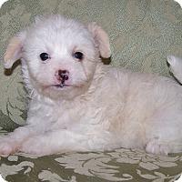 Adopt A Pet :: Maggie - La Habra Heights, CA