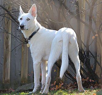 Border Collie Mix Dog for adoption in Cambridge, Ontario - Jagger
