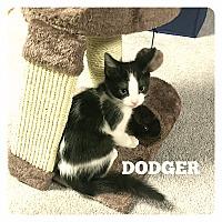 Adopt A Pet :: Dodger - Bentonville, AR