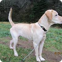 Adopt A Pet :: Serena - Tillamook, OR