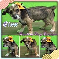 Adopt A Pet :: Gina - South Gate, CA