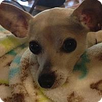 Adopt A Pet :: Tobey - Naples, FL