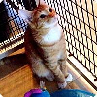 Adopt A Pet :: Leo - Deerfield Beach, FL