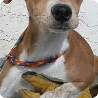 Adopt A Pet :: Jenna-ADOPTION PENDING - Boulder, CO