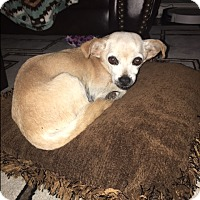 Adopt A Pet :: Tessa - Newport, KY