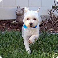 Adopt A Pet :: Ollie - Available April 1st - Antioch, CA