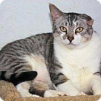 Adopt A Pet :: Gizmo - St. James City, FL