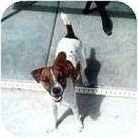 Adopt A Pet :: HAGEN - Gilbert, AZ