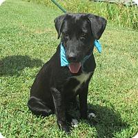 Adopt A Pet :: BRUCE - Leland, MS