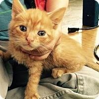 Adopt A Pet :: Carlo - Brooklyn, NY