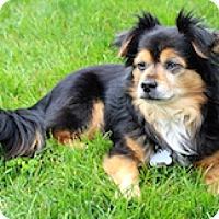Adopt A Pet :: Marty - Framingham, MA