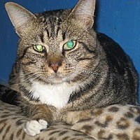 Adopt A Pet :: Timmy - Coos Bay, OR