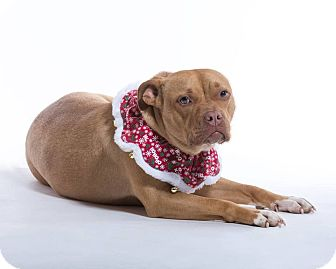 Pit Bull Terrier Mix Puppy for adoption in Homer, New York - Ayah
