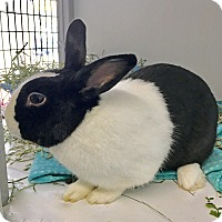 Adopt A Pet :: Reginald - Chicago, IL