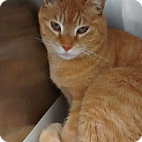 Adopt A Pet :: Prince Charming - Spring Brook, NY