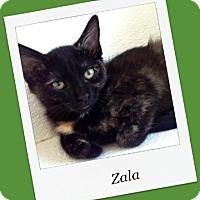 Adopt A Pet :: Zala - Tombstone, AZ