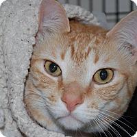 Adopt A Pet :: Noah - Victor, NY
