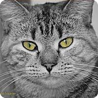 Adopt A Pet :: Trudy - Trevose, PA