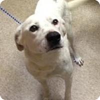 Adopt A Pet :: CHANNING - Glastonbury, CT